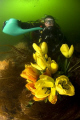  UNDERWATER TECHNICAL GARDENING. New sport Scotland due record rainfall August. Nik d70 10.5mm lens strobes. GARDENING August 105mm 10 5mm strobes  